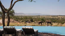 Four Seasons Safari Lodge Serengeti - elephants near camp