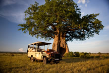 Kigelia Camp exclusive safaris